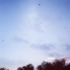 Kites at Tai Po Waterfront